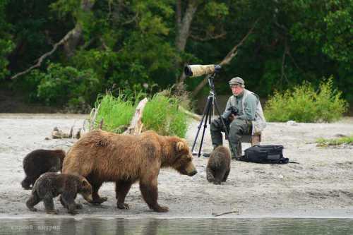 борзый кот украл еду у свирепого медведя гризли такой наглости животный мир еще не видел