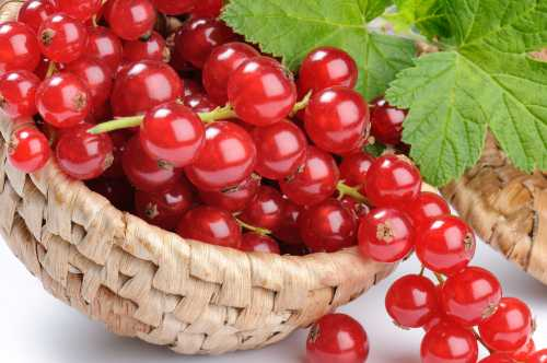 ягоды годжи: вся правда суперфуд или маркетинговый ход